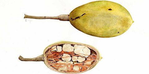 Il Baobab è l'albero della vita