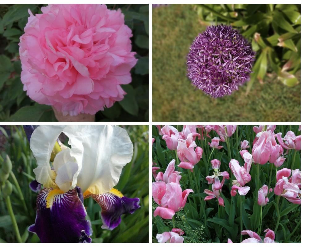 fioritura al parco